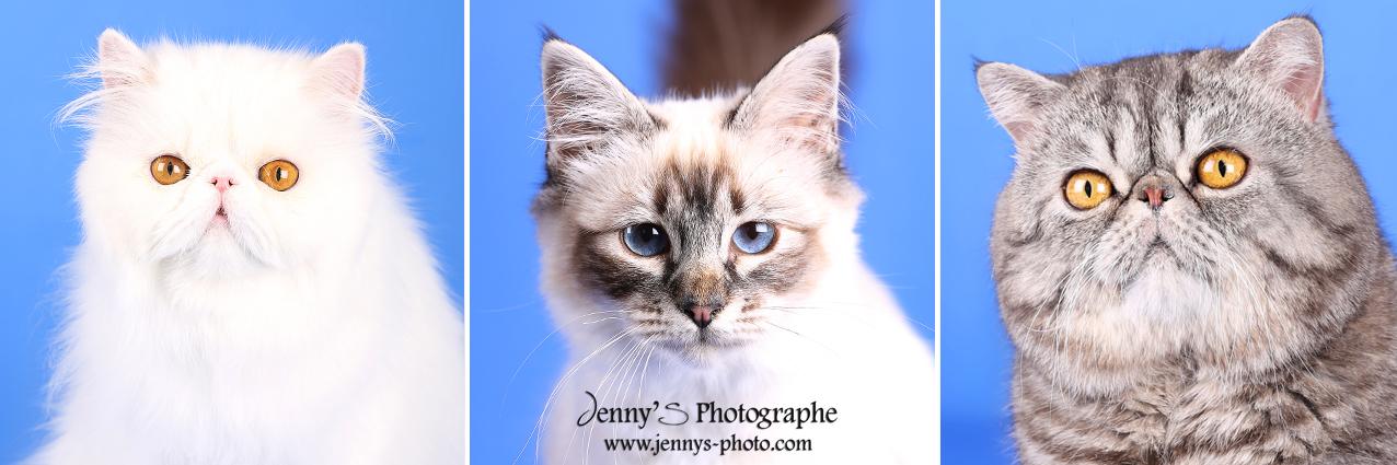 chien chat portrait photographe spécialisée photo animaux toulouse bessieres montauban gaillac albi elevage