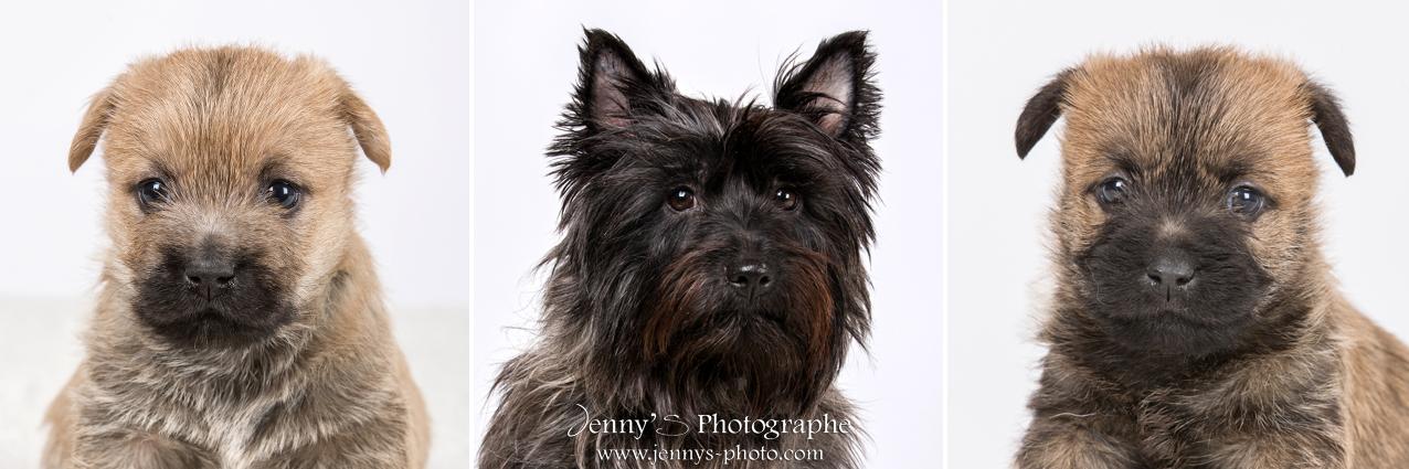 chien chat portrait photographe spécialisée photo animaux toulouse bessieres montauban gaillac albi